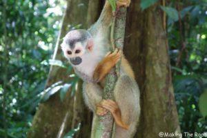 Costa Rica - Parc Manuel Antonio