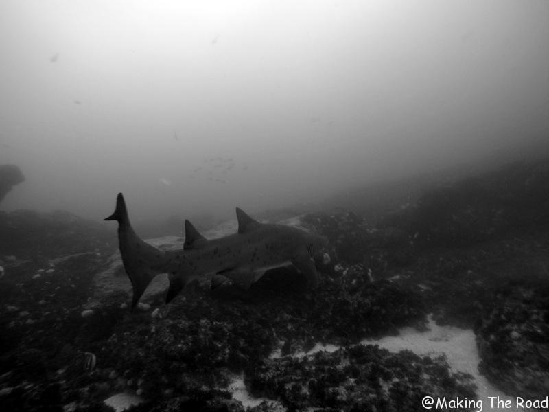 plongée aliwal shoal requin