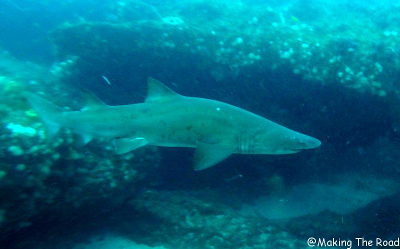 plongée aliwal shoal