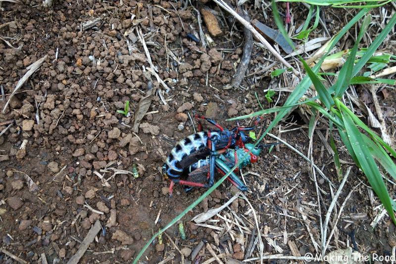 afrique du sud - drakensberg