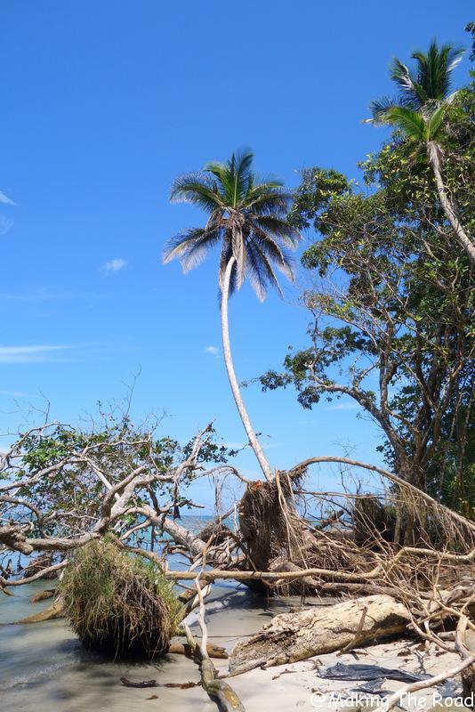 Cahuitas costa rica parc randonnée