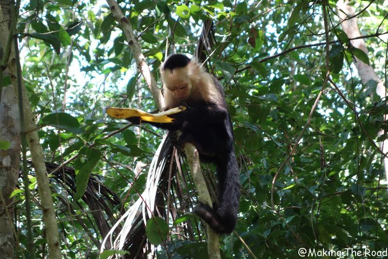 Cahuitas costa rica voir des singes